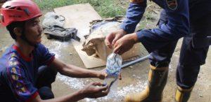 Belasan Anak Ular Kobra Ditemukan di Pemukiman Warga Purwakarta